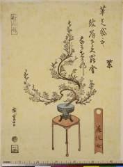 RV-1327-26a・・広重〈1〉「ひがん桜」「美佐女」